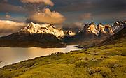 Cuernos del Paine peaks after dawn, thorny 'matabarrosa' ( Mulinum spinosum) in flower, Parque Nacional Torres del Paine, Patagonia, Chile.