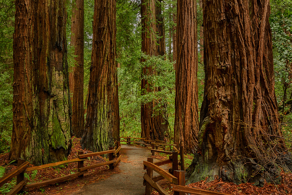 Muir Woods National Monument, Mill Valley, California