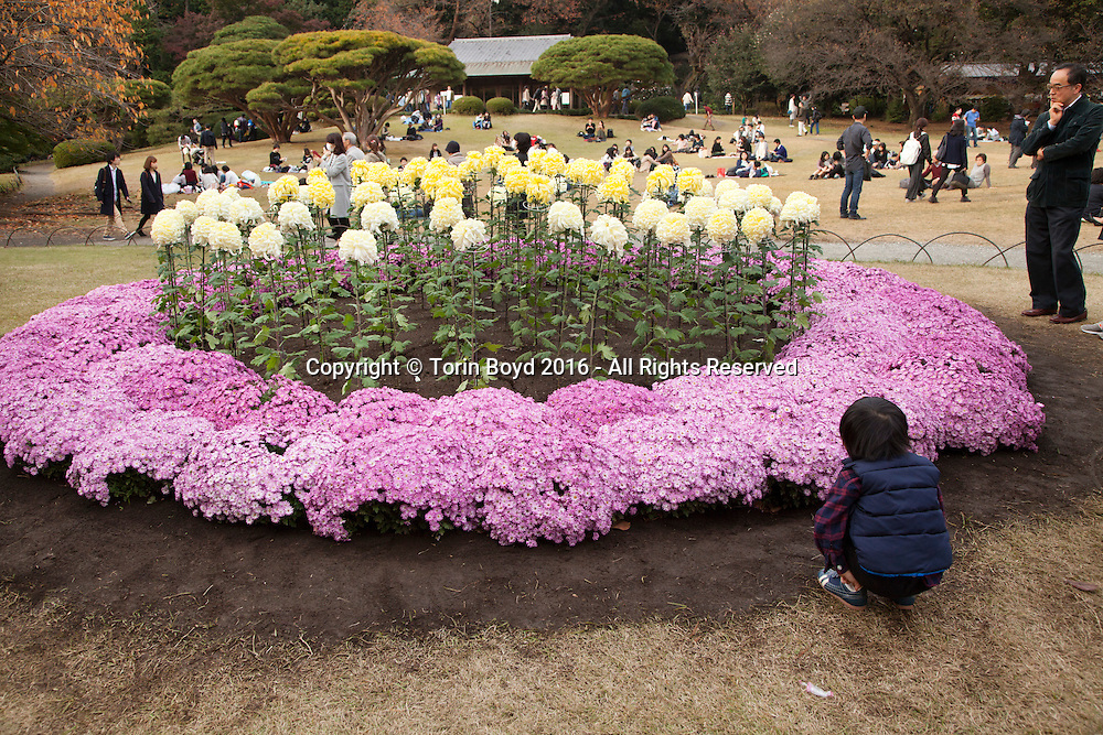 November 20, 2016, Tokyo, Japan: Every Autumn a special chrysanthemum exhibition is held within the grounds of Tokyo's Shinjuku Gyoen, a botanical garden in the center of the city. This month long flower display includes uniquely Japanese flowers, some so large they are the same size as basket balls. This garden which dates back to the 19th century was formerly part of the Imperial palace Outer Garden used exclusively by Japan's Imperial family. In 1949 this 144 acre site with over 20,000 trees was opened to the public and is now classified as a national garden. Photo by Torin Boyd.