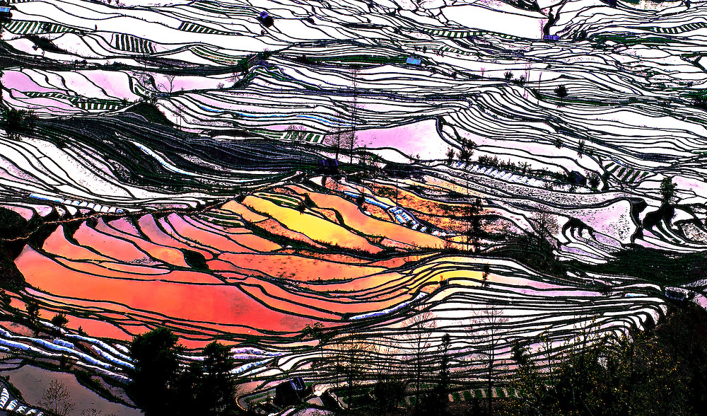 Some of the Hani rice terraces at sunrise in Yuanyang, Yunnan, China