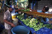 Harvesting bananas on plantation , St Lucia, Caribbean