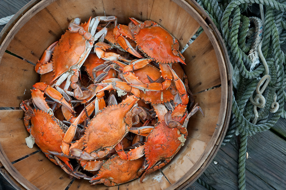 Maryland steamed crabs on the eastern shore