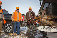 Bill Taunton Sr. (center) checks out the morning's bag of roosters at his ranch in South Dakota.