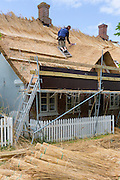 Thatcher thatching new roof traditional method with stooks of reeds/rushes on thatched cottage, Fano Island, Denmark