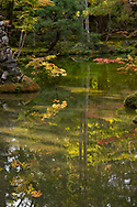 Orange Acer leaves reflected in the pond at the Saiho-ji Garden (Temple of Moss) Kyoto, Japan