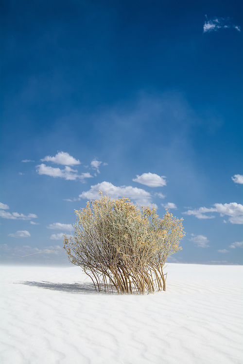 A lone, wind-beaten creosote bush stands solidly at the beginning of a sandstorm in White Sands National Monument in Southern New Mexico.
