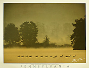 "Poster of geese in mist at Pymatuning State Park, Crawford County, Pennsylvania. White border with word ""Pennsylvania"" at bottom with space for framing."
