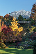 Fall foliage colors provided by Gingko (Gingko biloba) and Maple trees near the bridge and Bloedel Conservatory in Queen Elizabeth Park, Vancouver, British Columbia, Canada. Photographed from the Quarry Gardens at QE Park.
