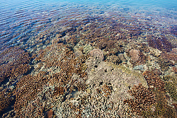 Corals and algae in the shallows on top of Montgomery Reef.