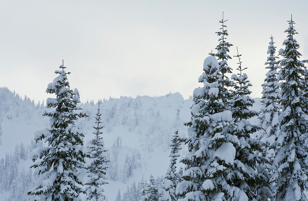 Snow covered trees and ridge line in the Central Cascades of Washington State near Steven Pass ski area