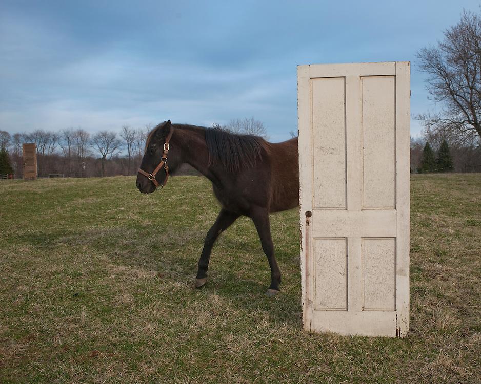 Horse and door