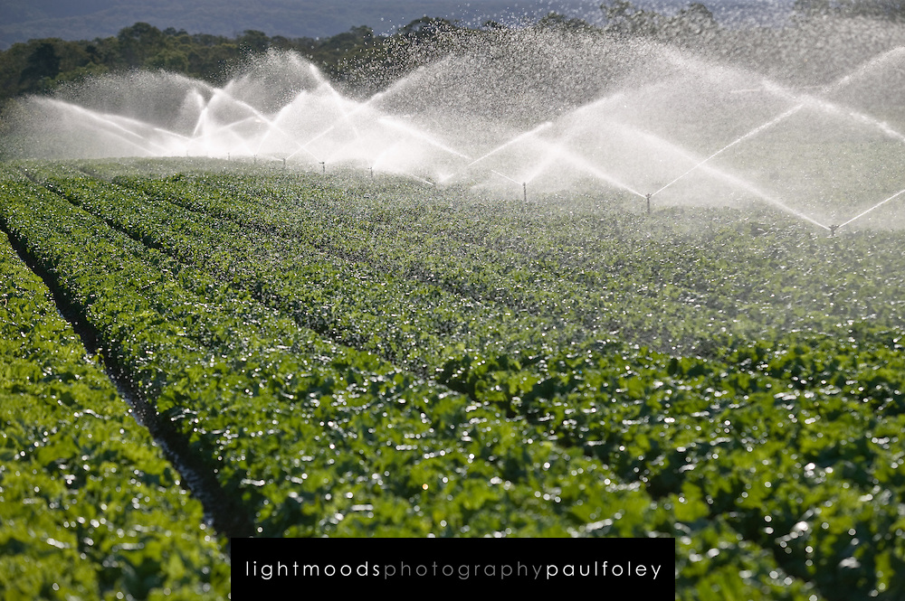 Irrigation of a Commercial Lettuce Crop on the outskirts of Sydney, Australia's largest city.