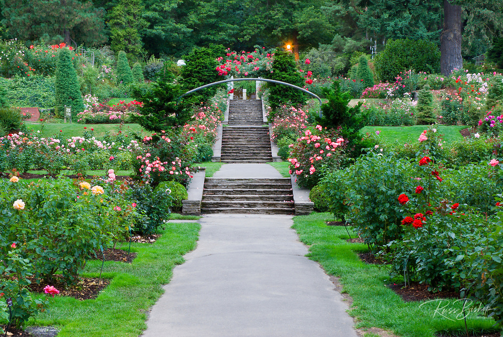 The International Rose Test Garden, Washinigton Park, Portland, Oregon