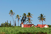 St. Joseph Mission in Kaumakani, Kauai on the island of Kauai, Hawaii is situated in the middle of a sugar cane field. Its last mass was said on October 10, 2010.