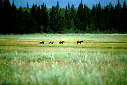 Alaska: Lake Clark Natl Park.  Bear Camp for grizzly bear viewing.  Photo akbear102..Photo copyright Lee Foster, 510/549-2202, lee@fostertravel.com, www.fostertravel.com