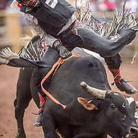 Archie Becenti Jr. holds on for eight seconds on his bull ride during the Navajo Nation Fair rodeo at the Navajo Nation Fairgrounds in Window Rock Saturday.