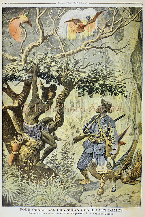 Killing Birds of Paradise, New Guinea, 1908.  The European hunter has a gun, while the native is proving himself proficient with his bow and arrow. The fashion in millinery which demanded ladies' hats be adorned with the feathers of these exotic birds led to some species being hunted to near extinction. From 'Le Petit Journal', (Paris, 8 November 1908).