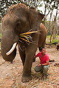 "Patara Elephant Farm; Chiang Mai, Thailand: owner Teerapat ""Pat""  Trungpakan demonstrating care of elephants."