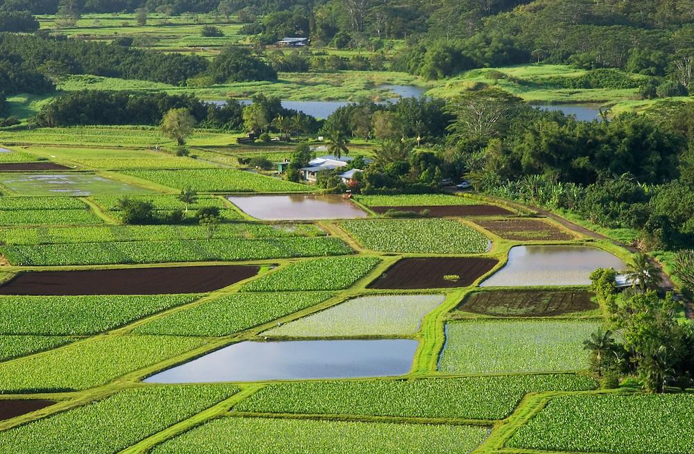 Hanalei Valley taro fields and Hanalei National Wildlife Refuge; Kauai, Hawaii.