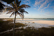 Idyllic shoreline and sandy beach scene with coconut palm tree at Anna Maria Island, Florida, United States of America