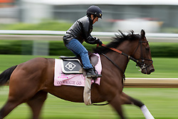 Derby 142 hopeful Go Maggie Go with Tammy Fox up were on the track for training, Tuesday, May 03, 2016 at Churchill Downs in Louisville.