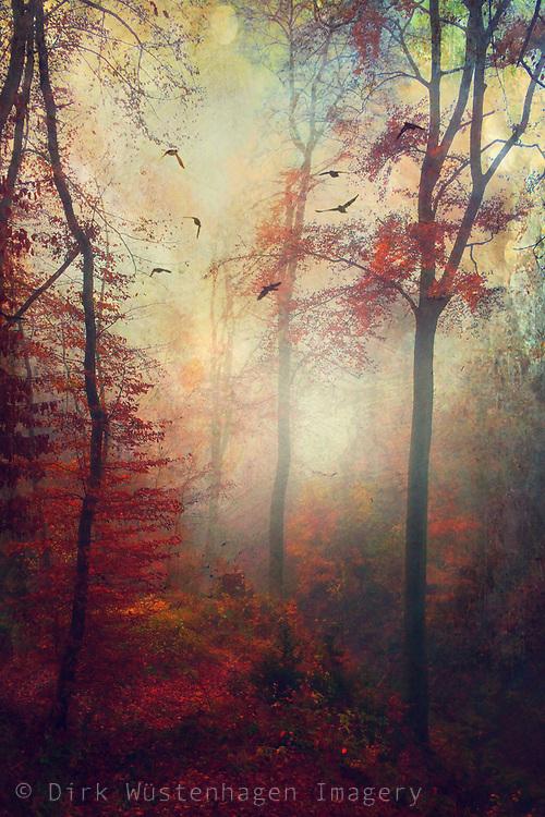 Hazy fall morning - textured photograph<br /> Prints: http://bit.ly/2otgmmj