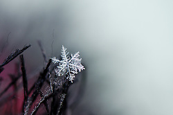 Who can resist the beauty of what happens when water vapor condenses onto dust particles in the atmosphere bringing us the snowflake in all of its crystalline perfection...fleetingly photographed.