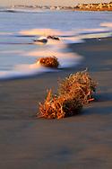 Early Morning on The Coast - Isle of Palms, SC