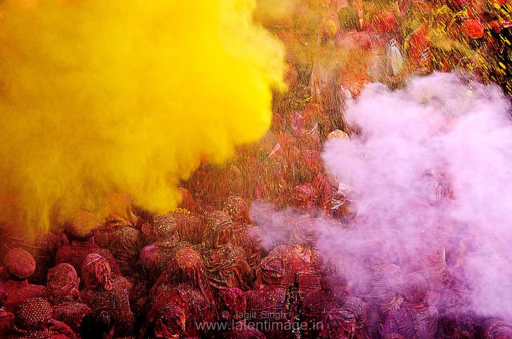 Dry color, Pink and Yellow on people during Samaj at Radha Rani temple, Barsana. Braj ki Holi