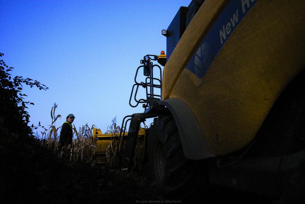 Champs de maïs à Melle sous la responsabilité des frères Guerin, installés en Poitou-Charentes, qui travaillent les terres de plus de trois cent clients locaux du semis à la récolte. Automne 2010.
