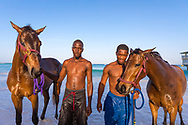 Horses from the Bridgetown Garrison being led by their groomers into the Caribbean Sea at Brownes Beach, Bridgetown, Barbados