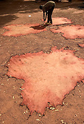 A worker nails cow hides to the ground to stretch them as they dry at a local tannery in Tamale, Northern Ghana.