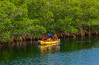 Sea kayaking, John Pennekamp Coral Reef State Park, Key Largo, Florida Keys, USA