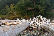 Tree stumps and driftwood on the beach at Whytecliff Park in West Vancouver, British Columbia, Canada
