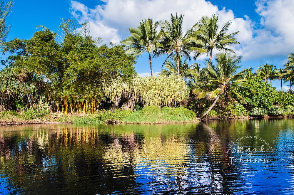 Tropical flora reflected in stream, Hanalei, Kauai, Hawaii