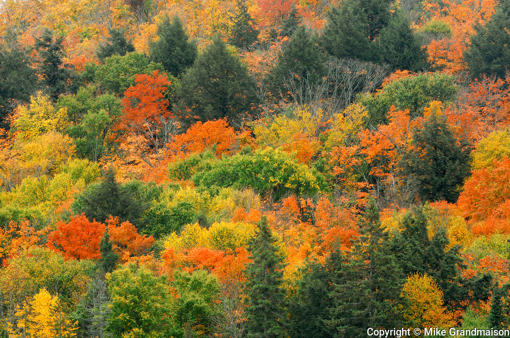 Forest in autumn colors at Lake of Two Rivers <br /> Algonquin Provincial Park<br /> Ontario<br /> Canada