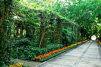 The Guangxi Medicinal Herb Botanical Garden is overflowing with plants and trees providing wonderful lush garden views.