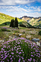 Sunshine slowly creeps down the mountainside in Little Cottonwood Canyon near Salt Lake City, Utah as the purple aster wildflowers bloom on the hillsides.