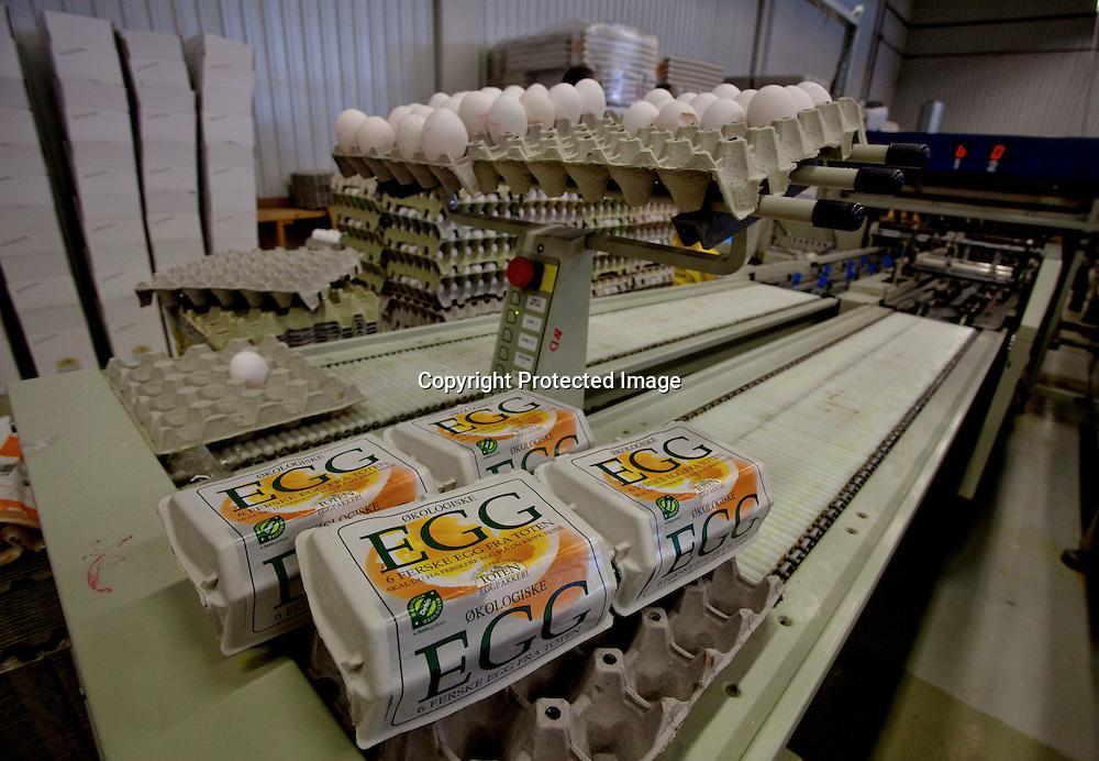 26032009, Totenvika. EGGEMBALLASJE: På Toten eggpakkeri kvalitetssikres og sorteres eggene fra Helgestad gård etter størrelse før de pakkes i den endelige emballasjen. Neste stopp er kjøkkenbordet...Foto: Daniel Sannum Lauten/VG