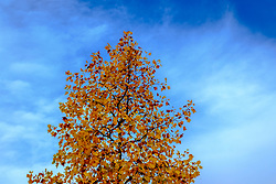 Autumn leaves against a pleasant blue sky, Toulouse, France<br /> <br /> (c) Andrew Wilson | Edinburgh Elite media