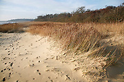 Benacre Broad national nature reserve, Suffolk, England