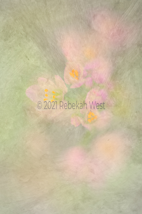 Dusty pink and light red-violet blurred flowers with yellow gold centers smeared along vertical field mostly on the right side, three centered blossoms almost in focus, in grey gray green background, painting, photograph, millennial pink, blue green center soft, flower art, feminine, high resolution, licensing, 2632 x 3949