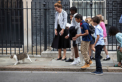 © Licensed to London News Pictures. 30/08/2019. London, UK. School children and their teacher on a visit to Downing Street attempt to stroke Larry the cat. The government has asked the Queen to suspend Parliament in the days after MPs return to work in September - a few weeks before the Brexit deadline of October 31st. Photo credit: Peter Macdiarmid/LNP