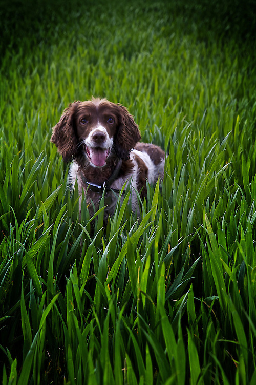 Spring has Sprung!<br />