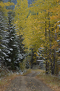 Spread Creek Road in fall. Kootenai National Forest in the Purcell Mountains, northwest Montana.
