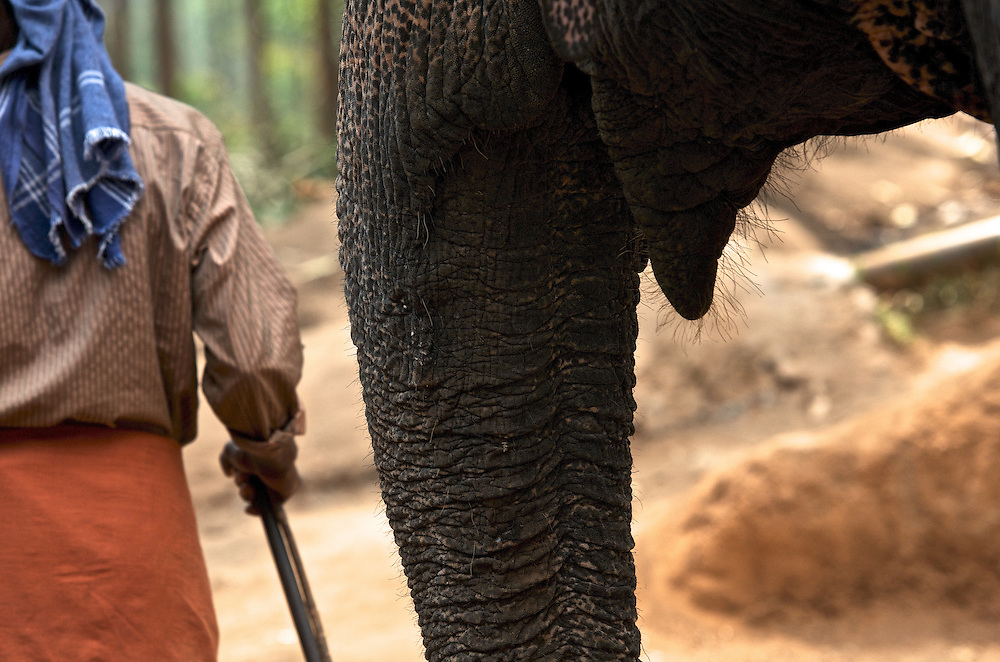 Elephant rides near Munnar in Kerala, India