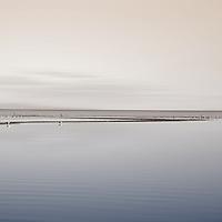 The breeding colony of flocks of birds at the Salton Sea in California.