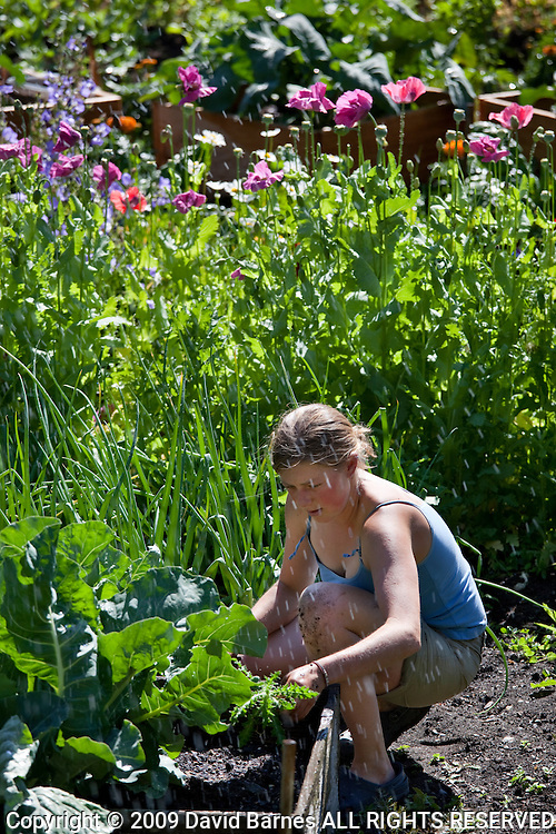 Woman kneeling working in vegetale  garden