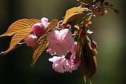 Spring Exhibit<br /> VICTORIA MEDINA GALLERY