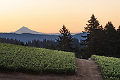 Lemelson's Vineyards